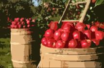 apple-basket-resized